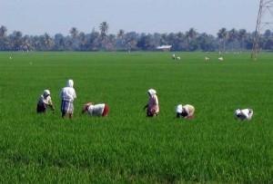 agronomie-india